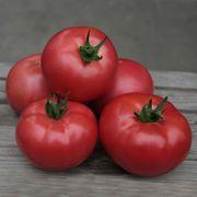 Семена Китано. Розовый томат KIBO F1 / КИБО