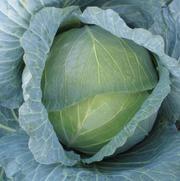 Семена фирмы Китано.  Белокочанная капуста NAOMI F1 /  НАОМИ