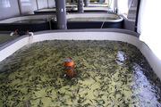 Консультация по вопросам рыбоводства (УЗВ) и постройка рыбных ферм